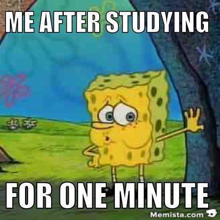 spongebob studying