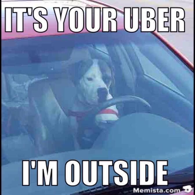 uber doggo